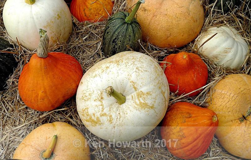 Pumpkins on parade Arnside - Natural World