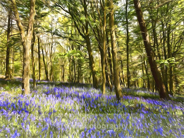 Bluebells in Paint. - Yorkshire Countryside