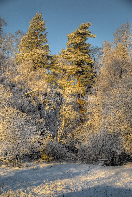 Forest Snow 2 - Natural World