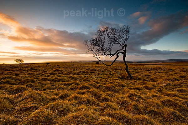 Tree on the Moor - Peak District