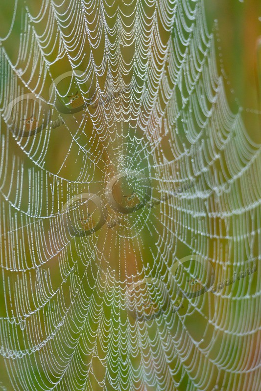spider web-3151 - Insects from around the world