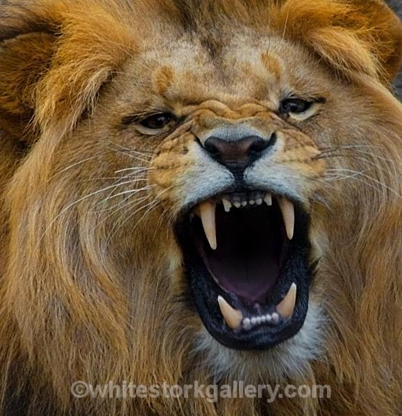 Roar ! - Wildlife and Animals