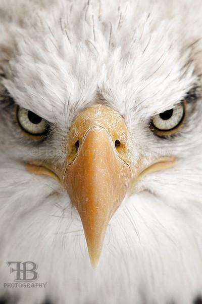 WoW jan-89 - Birds of Prey