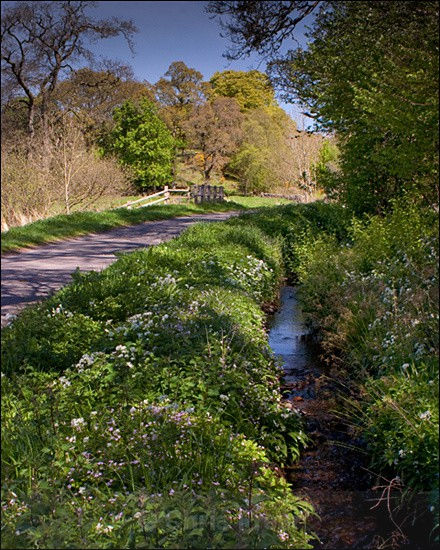 Country Lane - Traditional Landscapes