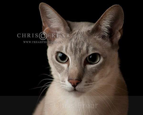 Cat II - Animals/ Wildlife