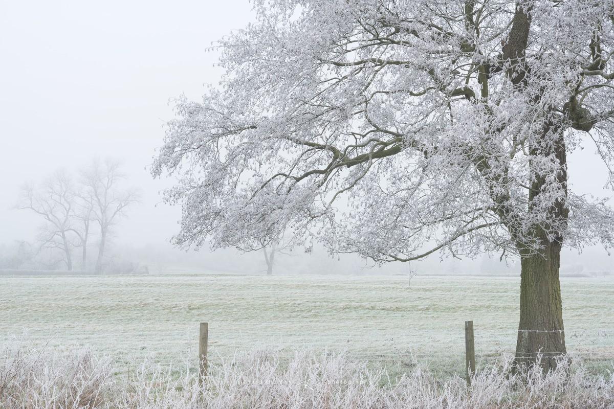 January hoar frost - WINTER