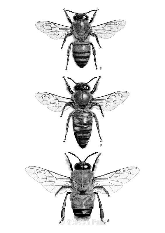 Honeybee Combo - Bees