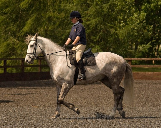 18 - Equestrian Photography