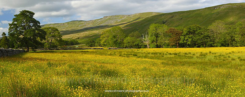 Summer Meadow, Mallerstang, Yorkshire Dales. - The Pennines and The Lake District