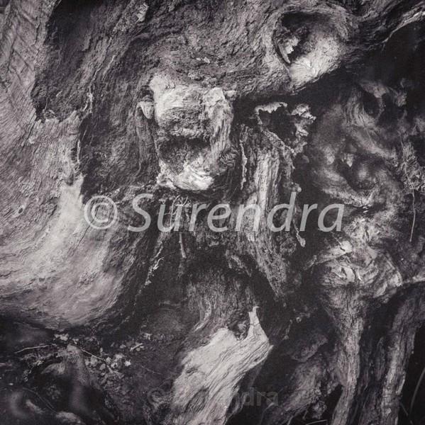 Bark # 17D - Bark Series 1 樹皮