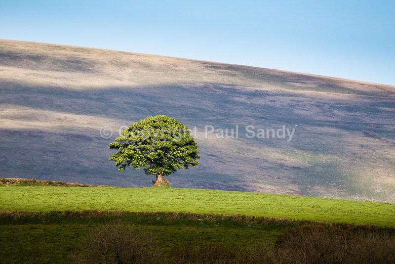 Dartmoor from Bridestowe - Featured Images