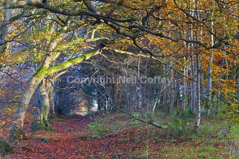Calderglen Country Park, South Lanarkshire2 - Landscape format