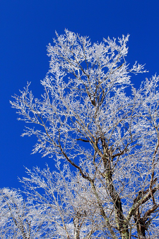 Snowflake Ice Tree - Winter