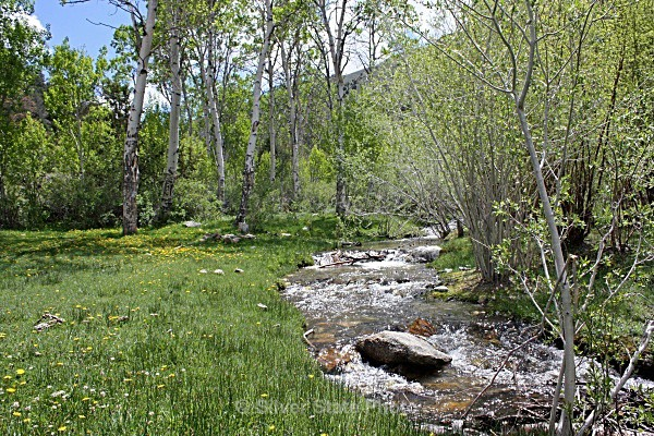 Cottonwood Creek - Nevada (mostly) Landscapes