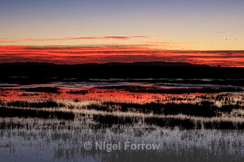 Dawn at Bosque del Apache, New Mexico - New Mexico, USA