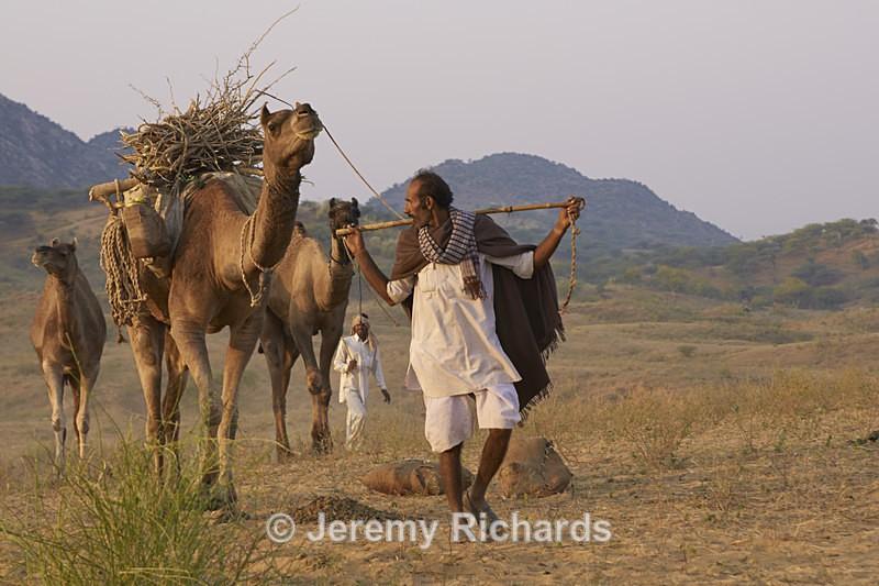 Arriving at the Pushkar Camel Fair - India