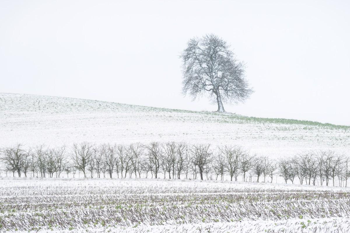 Downland Winter - WINTER
