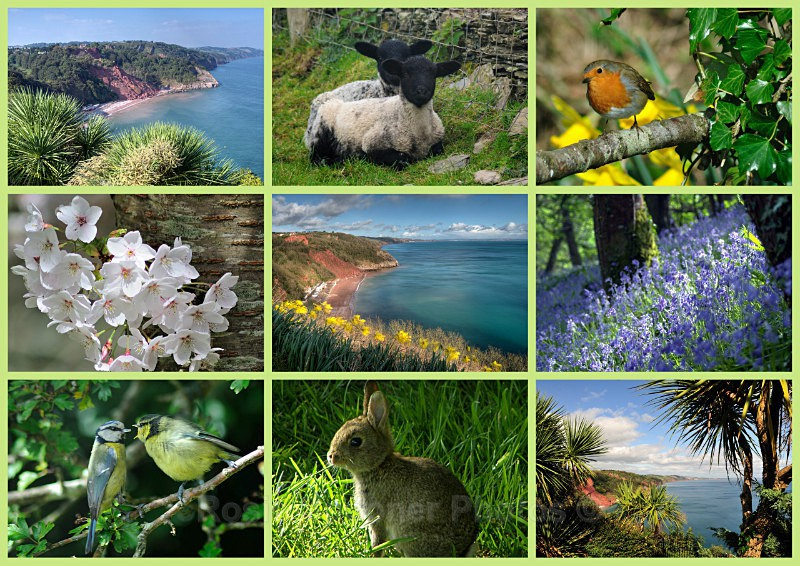 TQ72 - Springtime Views in Torquay - Greetings Cards Torquay (separate galleries for Meadfoot Beach/Ansteys and Cockington)