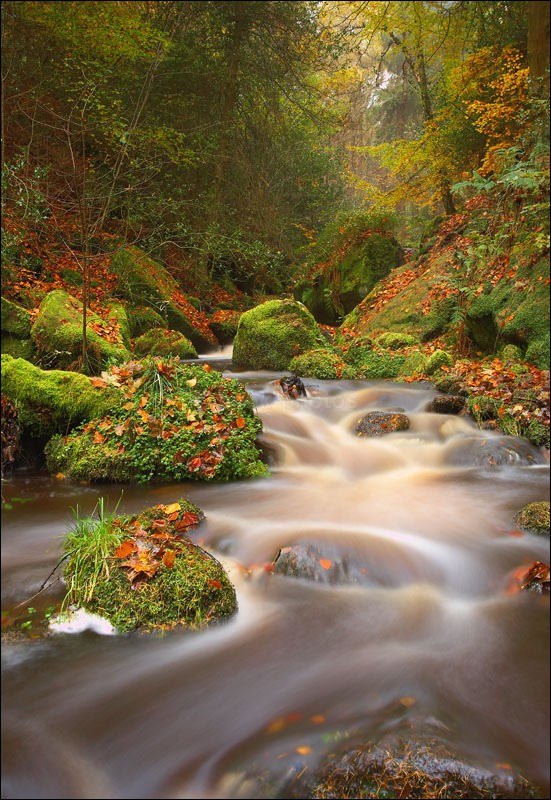 Wyming Brook - Photographs of Woodland & Rivers