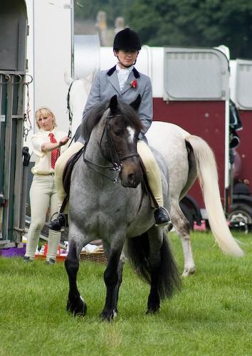 64 - Moniaive Horse Show 2008