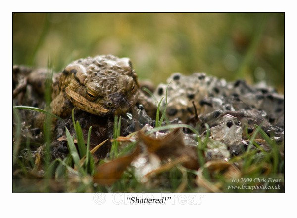 Shattered! - Animals/ Wildlife