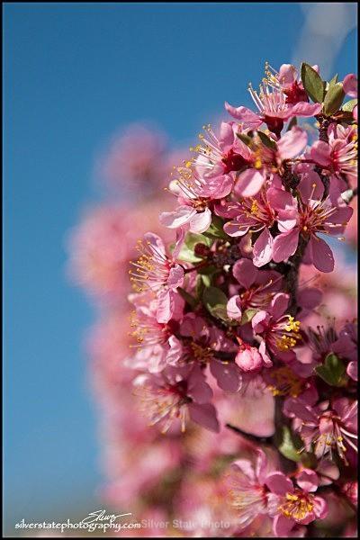 IMG_4489-a-web - Flowers