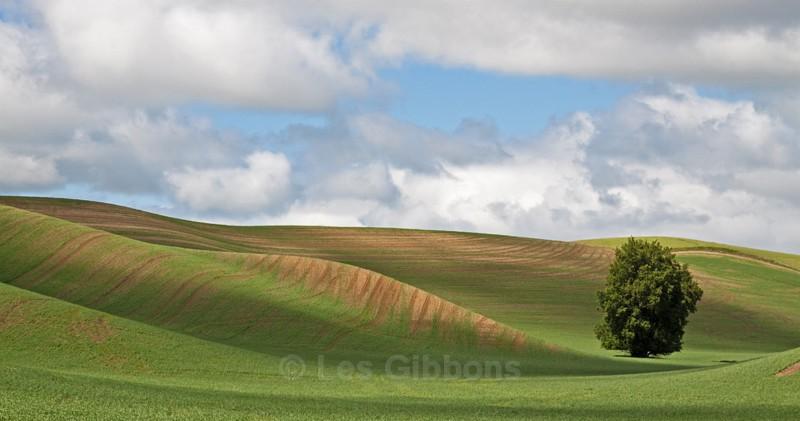 the tree 4 - Palouse