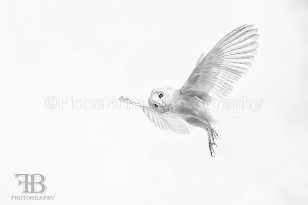 wow april-7 - Birds of Prey