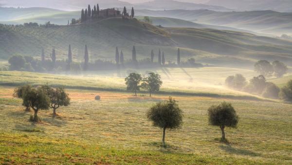 belvedere trees - Tuscany
