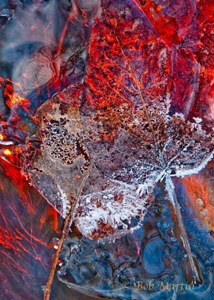 Ice and Leaves - Fire and Ice (experimental - enter at your own risk!)