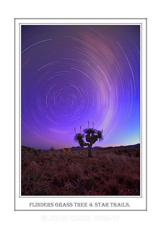 Beautiful Wall Art print, with a Border, showing Star Trails over a large Grass Tree in the Flinders Ranges, South Australia.