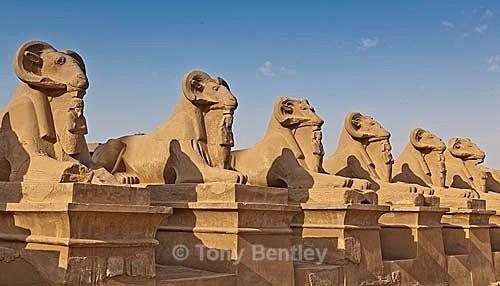 Sphinx - Egypt