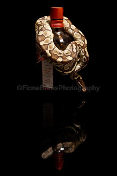 snakes-6 - Reptile Photography
