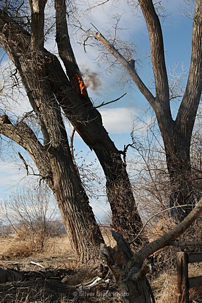 Cottonwood Tree Fire - Fallon/Churchill Fire Department