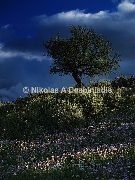 Spring I Άνοιξη - Δέντρα Ι Trees