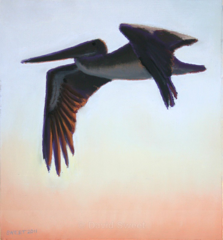 Wee Pelican - Paintings