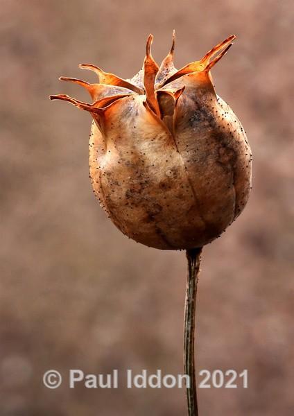 Seed - Creative