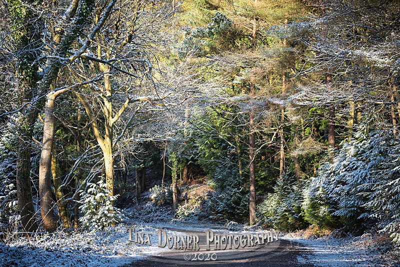 White Glade - Winter in The Forest of  Dean & Wye Valley