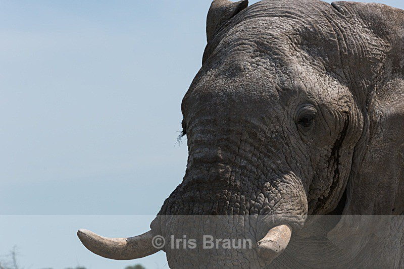 Four tons - Elephant
