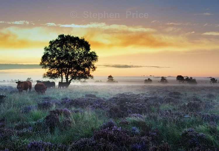 Dawn Photography at Leash Fen | Derbyshire Peak District
