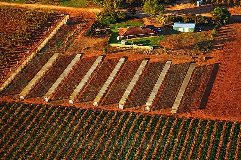Vineyard Drying Racks from a Hot Air Balloon-3882 - AERIAL PHOTOS