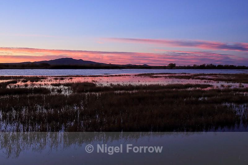 Sunrise at Bosque del Apache, New Mexico - New Mexico, USA
