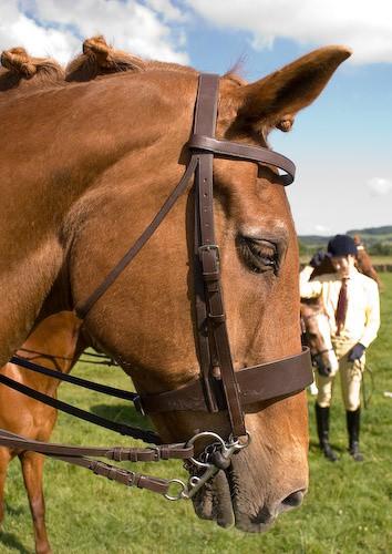 178 - Moniaive Horse Show 2008