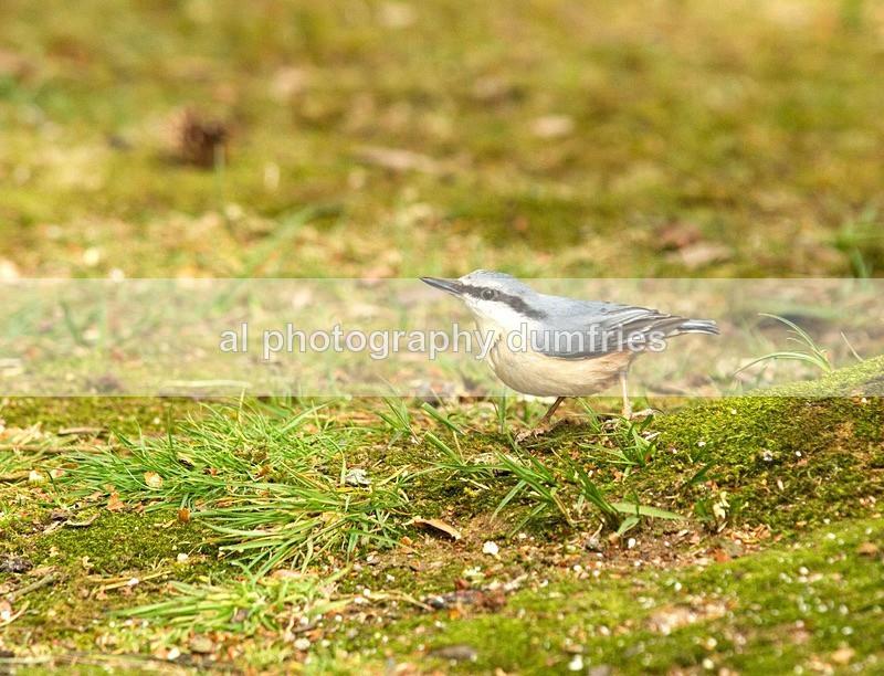 Nut Hatch - Eskrigg Nature Reserve Lockerbie