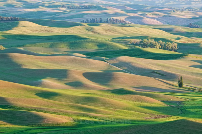 fields 4 - Palouse