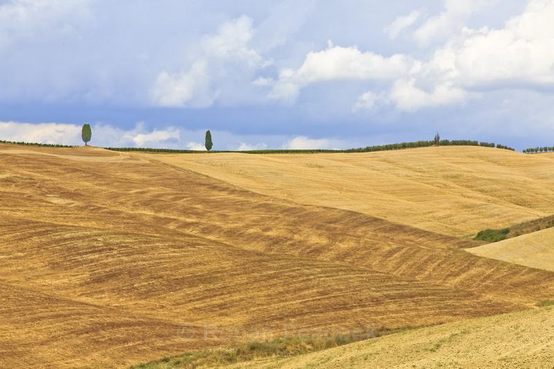 Trees on hills - Slovenia and Tuscany