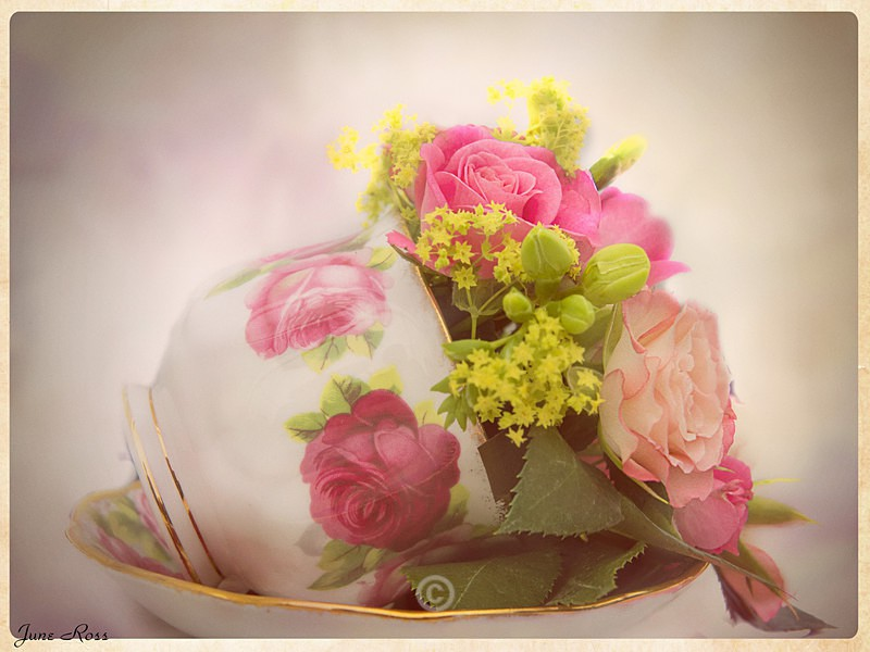 China Roses - FLOWERS