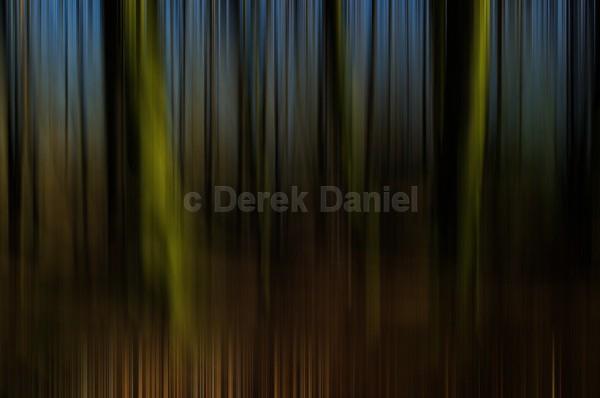 Tree Impression #1