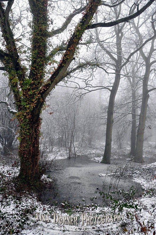 Ivy growing up tree by frozen pond. Winter Landscape portfolio by Tina Dorner Photography,  Forest of Dean and Wye Valley, Gloucestershire