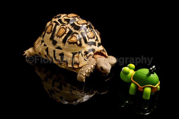 Timmy lo - Reptile Photography
